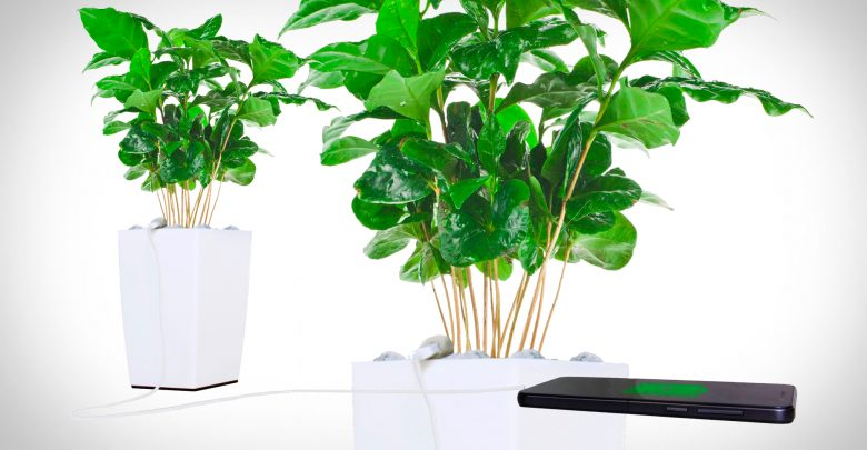 Photo of Potteplanten der oplader din smartphone