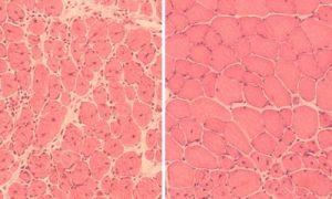 Mus celler