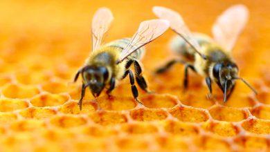 Photo of Svenske forskere kobler 160.000 bier på nettet