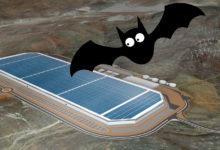 Photo of Flagermus driller Teslas tyske Gigafactory-planer