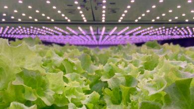 vertikale landbrug